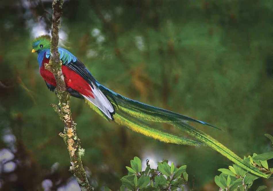 quetzal-2.jpg
