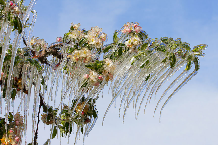 frozen-ice-art-13__880.jpg