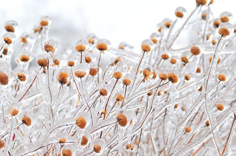 frozen-ice-art-16__880.jpg