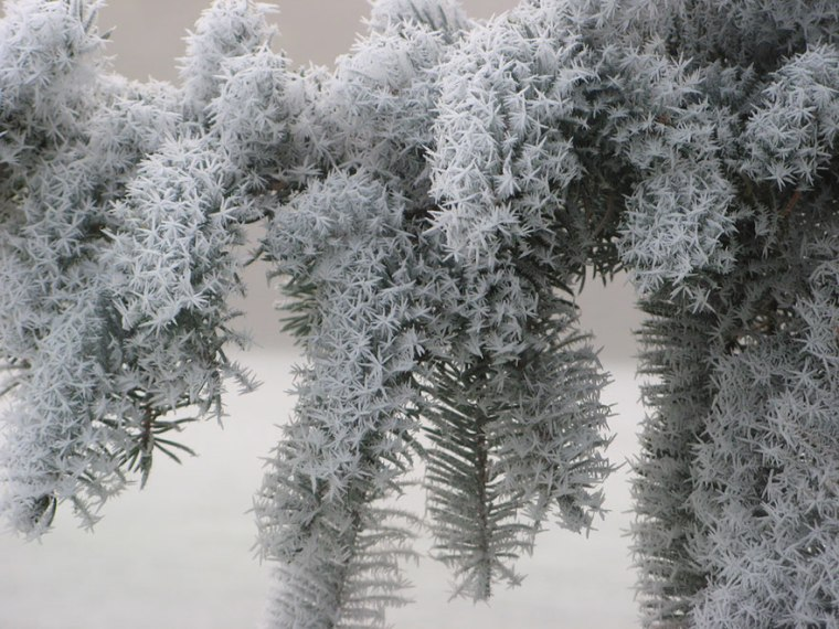 frozen-ice-art-9__880.jpg