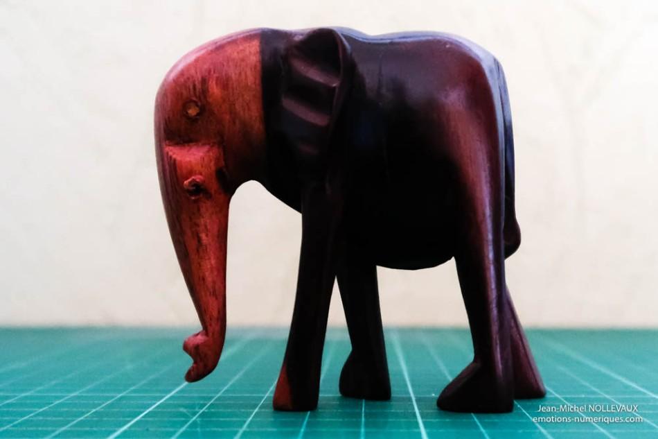 elephant-1600-iso-1.jpg