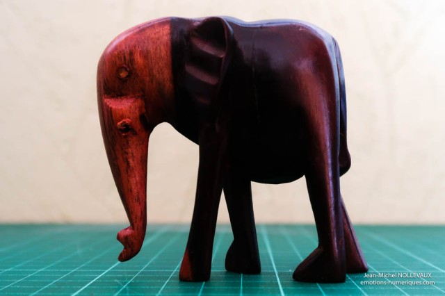 elephant-200-iso-1.jpg