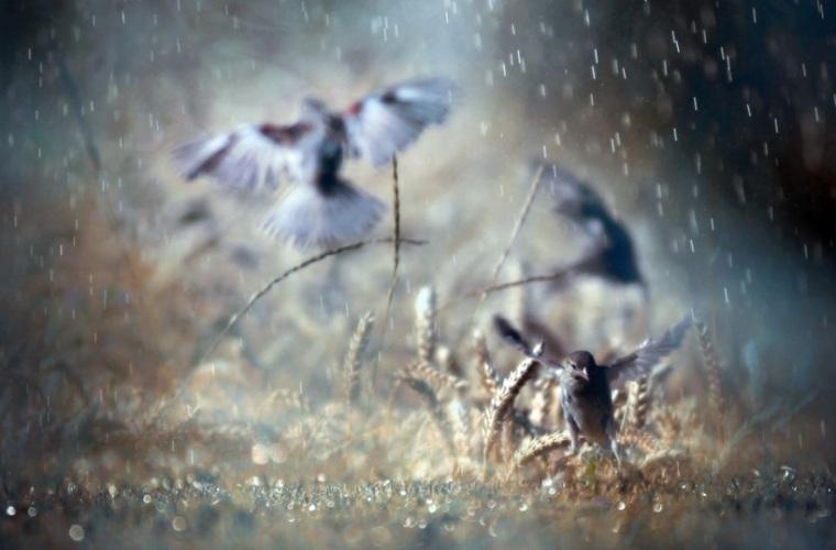 photos-sous-la-pluie.jpg