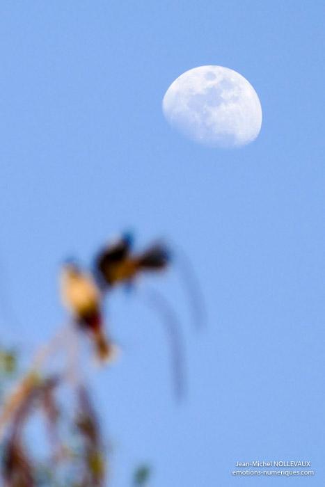 Lune-5.jpg