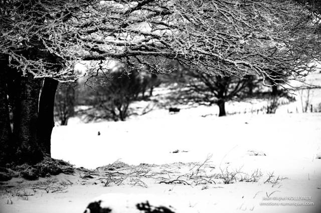 noir-et-blanc-1.jpg