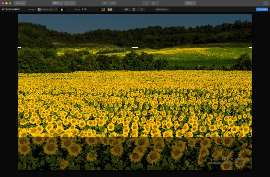 fleurs-04b.png