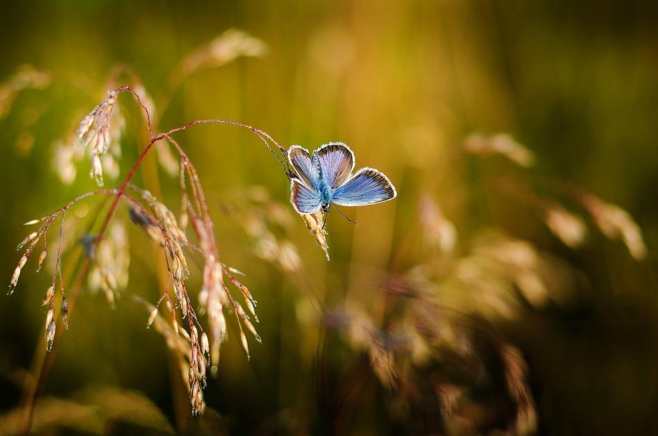 argus-bleu.jpg
