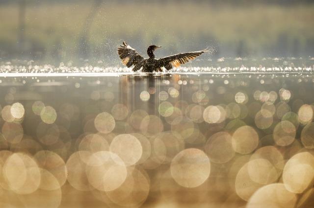 cormoran-21.jpg
