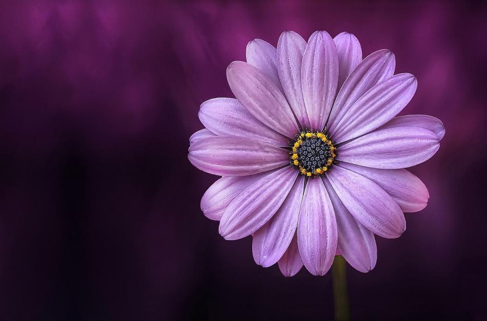 fleur-du-jardin.jpg