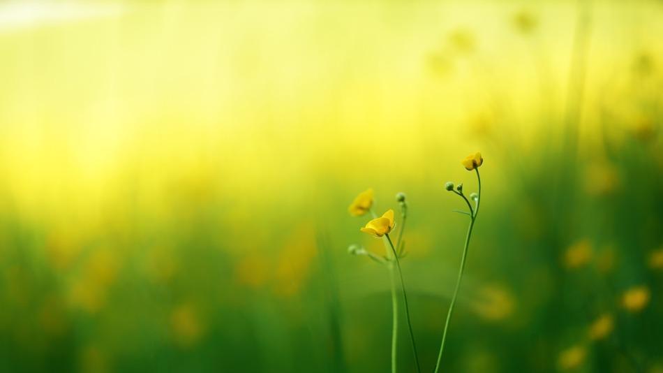 flore.jpg