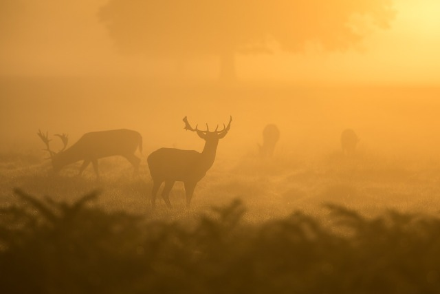 animaux-dans-la-brume.jpg