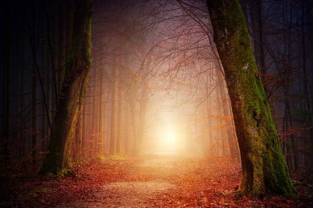 brouillard-en-sous-bois.jpg