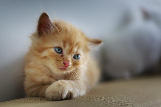 cat-3266673_1280.jpg