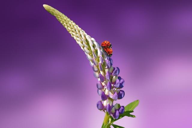 fleur-5.jpg