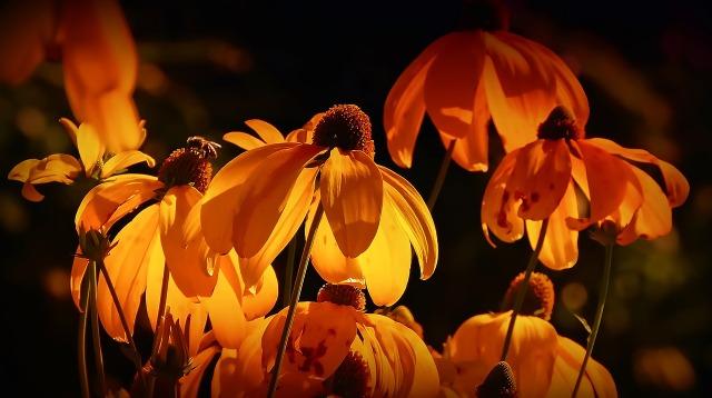 fleur-8.jpg