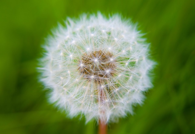 fleur-9.jpg