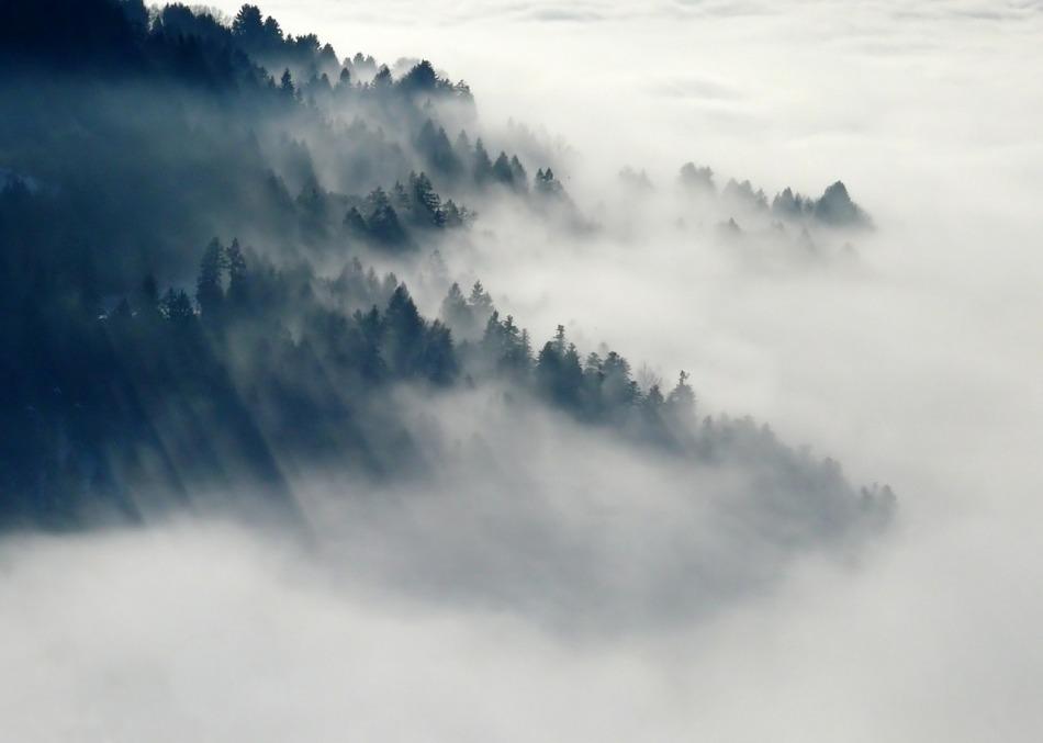 foret-dans-le-brouillard.jpg